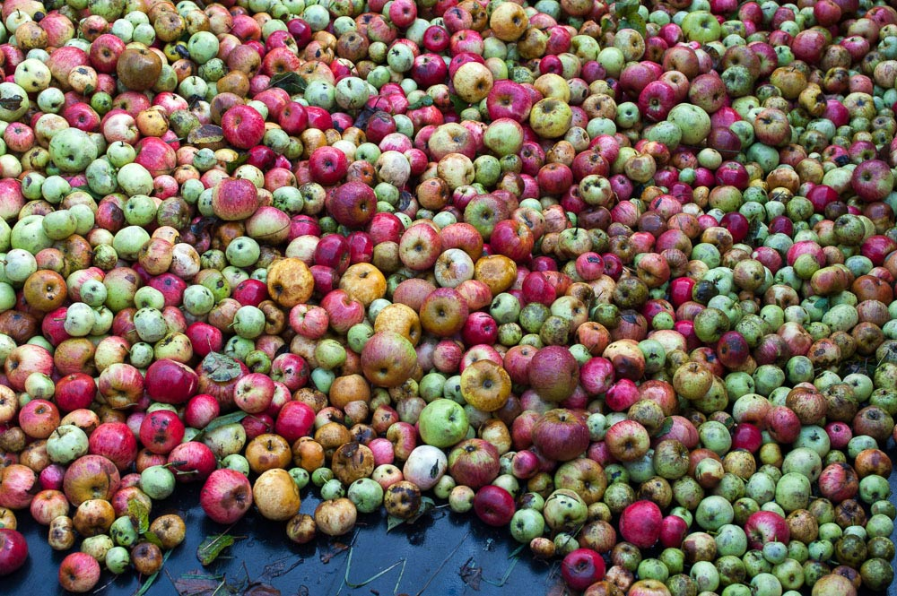 colorful-apples